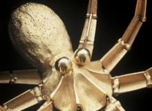 jacques-monestier-1967-la-pieuvre-2